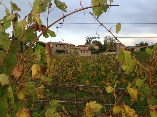 Borgo Argenina: The vineyards