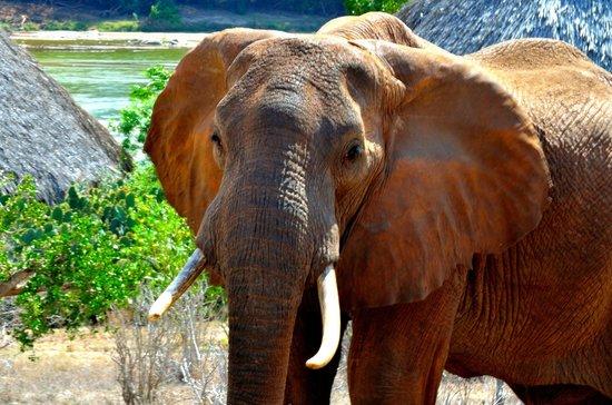 Morris Safari Kenya - Day Tours: 6