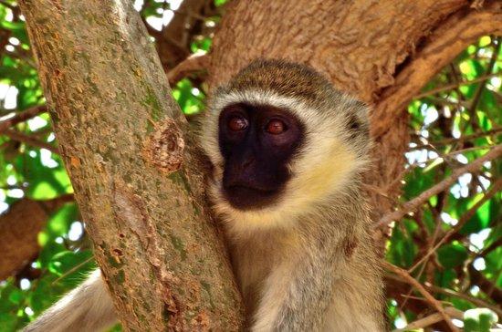 Morris Safari Kenya - Day Tours: 5