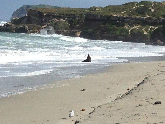 Exceptional Kangaroo Island : Seal Bay