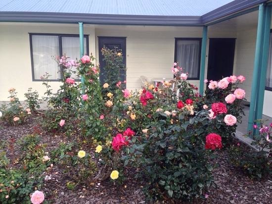 Eastland Pacific Motor Lodge: roses