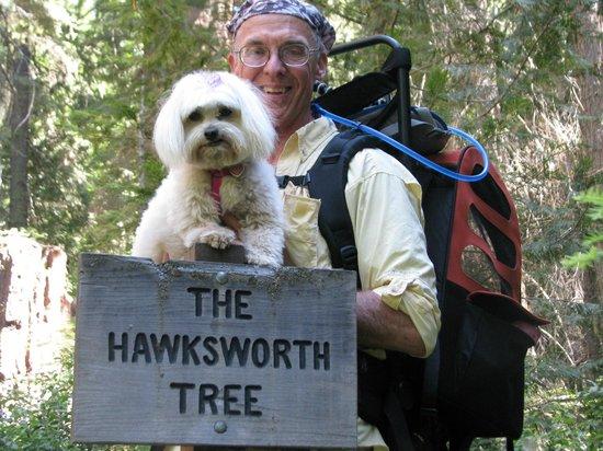Nelder Grove : Out on the trail, near the massive Hawksworth Tree