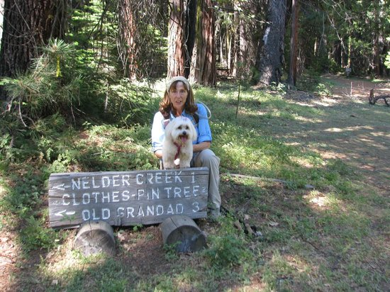 Nelder Grove: At the trailhead in the Grove campground