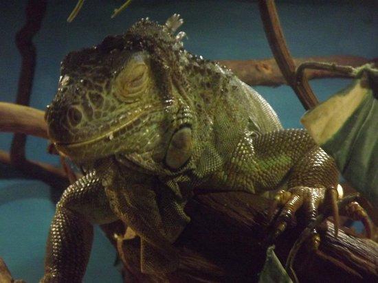 Reptile World New Quay: Lizard