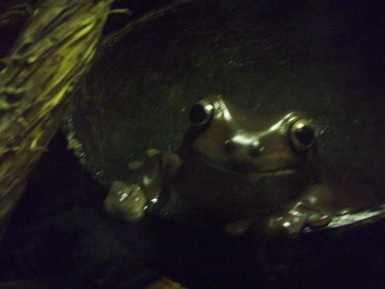Reptile World New Quay: Frog