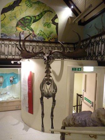 Maidstone Museum & Bentlif Art Gallery: Galerie des dinosaures