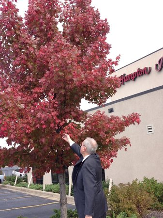 Hampton Inn Mount Airy: Gorgeous fall in Mt. Airy, N.C.