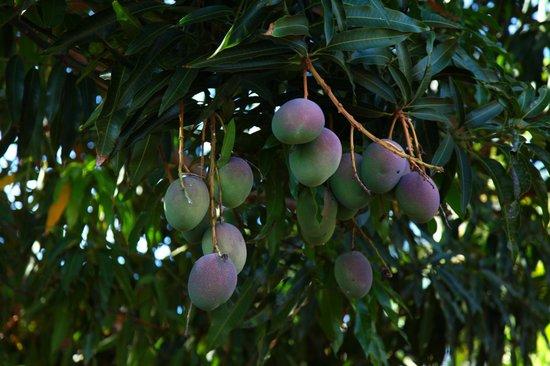 Kulakane: natural fruits