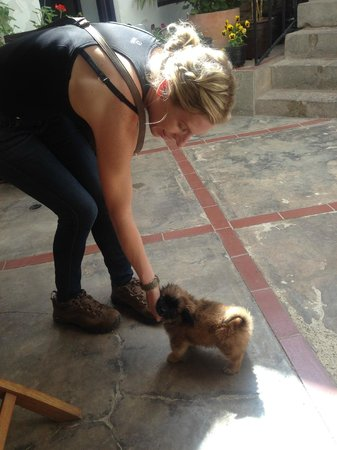 Second Home Cusco : Coco and Toby