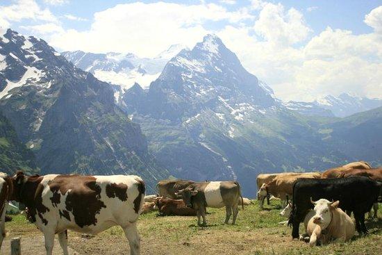 Sunstar Hotel Grindelwald: Berner Oberland