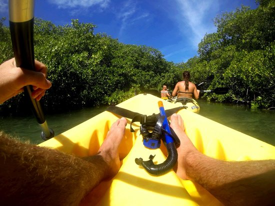 Mangrove Information Center Kayak & Snorkel Excursions: Snorkelsetje vast aan de kajak