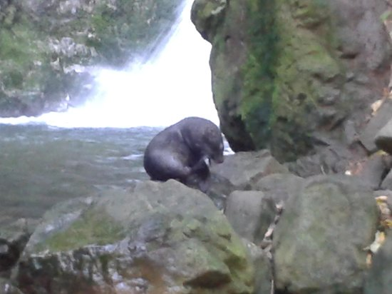 Ohau Waterfall Walk and Seal Pups: one of the seals