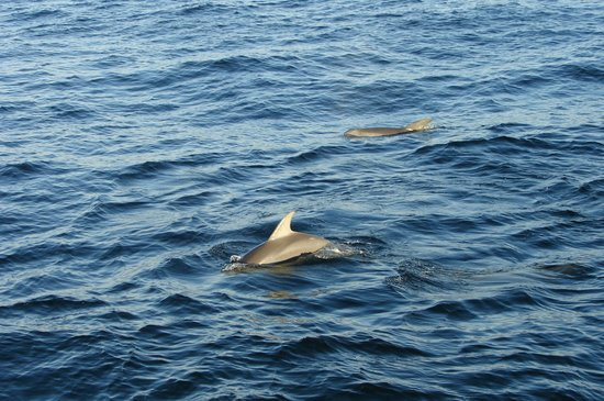Olin Marler Fishing and Dolphin Cruises: Dolphin