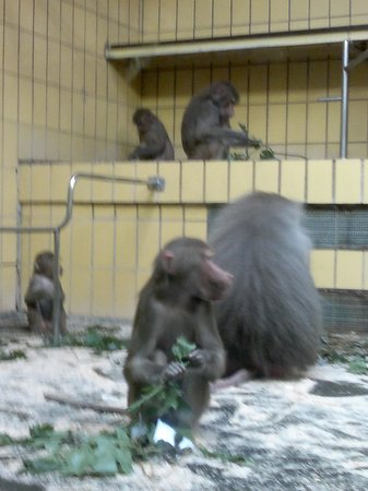 Zoologischer Garten Frankfurt/Main: Questo lo chiamano habitat naturale