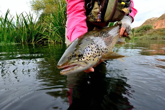 Salvelinus Fly Fishing Center: This brown trout has bragging rights!