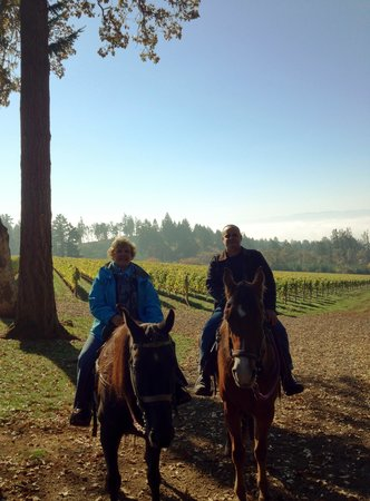Equestrian Wine Tours: Well-behaved horses
