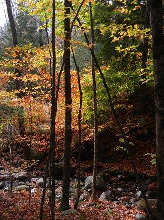 Autumn Splendor at Camp Orenda