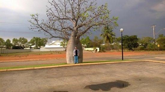 Boab tree outside Blue Seas Resort