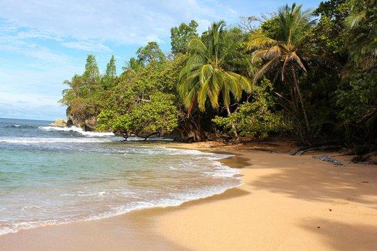 Panama's Paradise Saigoncito: Playa Bluff