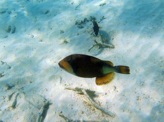 Centara Grand Island Resort & Spa Maldives: Reef near the room