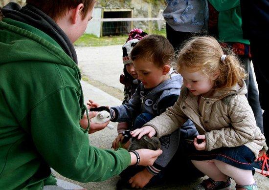Loughwell Farm Park : Baby rabbits