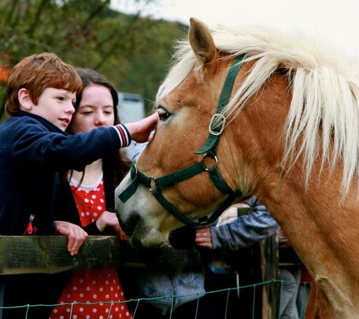 Loughwell Farm Park: Willow our pony