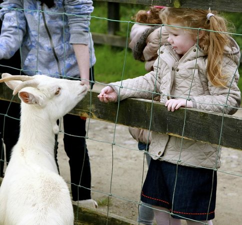 Loughwell Farm Park: Feeding the goat