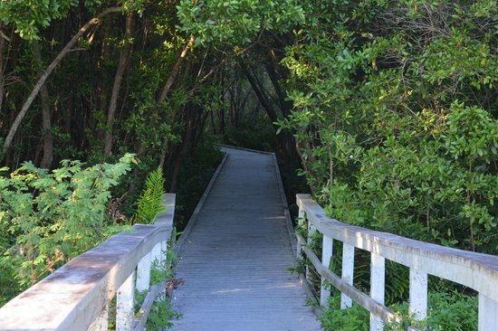 Four Mile Cove Ecological Preserve: Nature trail starting point.