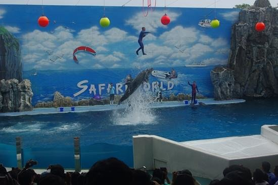 Safari World: Dolphin show - the dolphin lifts the man up in the air
