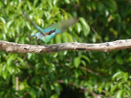 Kinabatangan Jungle Camp: lucky shot