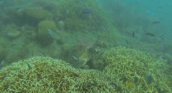 ISail Whitsundays : snorkelling for turtles