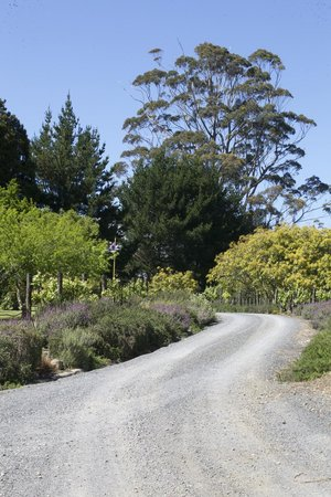 Puketotara Lodge: Entrance Drive