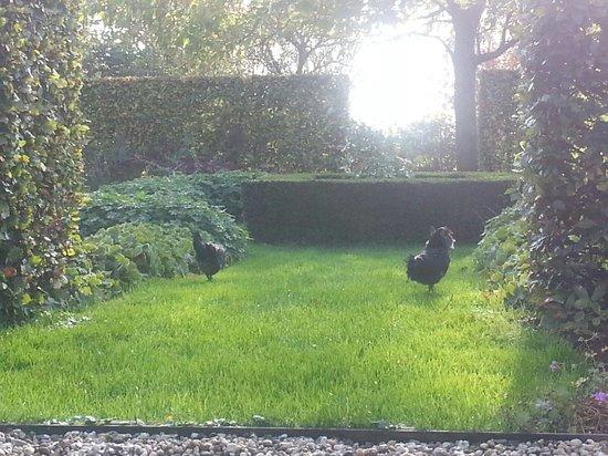 B&B Heerlijkheyd : Kippen in de tuin