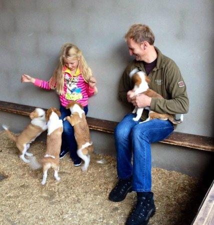 Muckross Riding Stables B&B: Puppy's