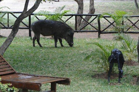 Pezulu Tree House Game Lodge: Gezelschap tijdens het ontbijt