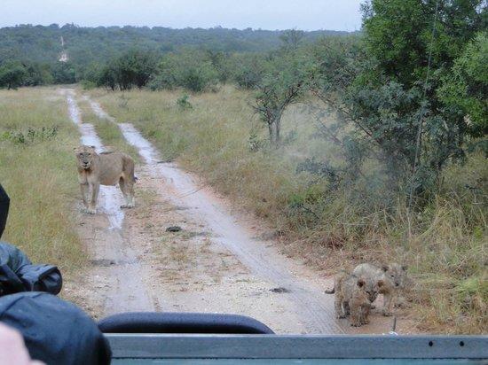 Pezulu Tree House Game Lodge: Op safari