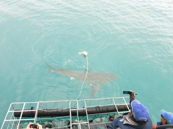 Supreme Sharks: utsikt ovanifran