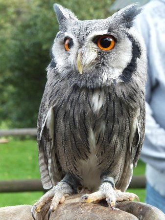 Falconry Experience Wales: Our first meet and greet