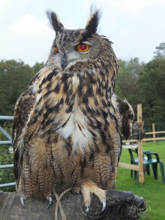 Falconry Experience Wales: Meeting and greeting the birds