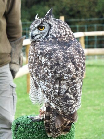 Falconry Experience Wales: Just about to start the flying