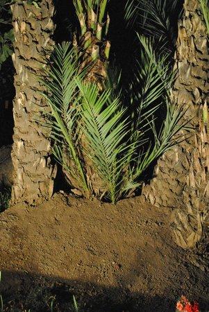 Hotel Riu Tikida Garden : belle végétation