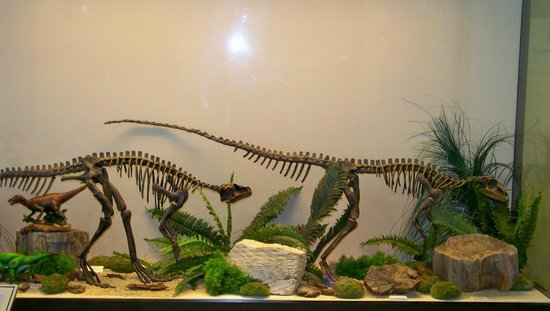Palaeontology Museum of Estepona