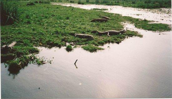 Ibera Wetlands, Argentina: Parque Nacional E.del Ibera-Corrientes-
