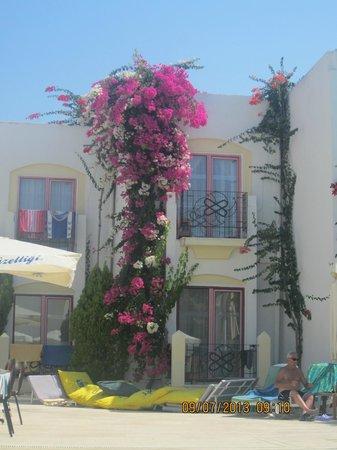 Hotel Serpina: Poolside