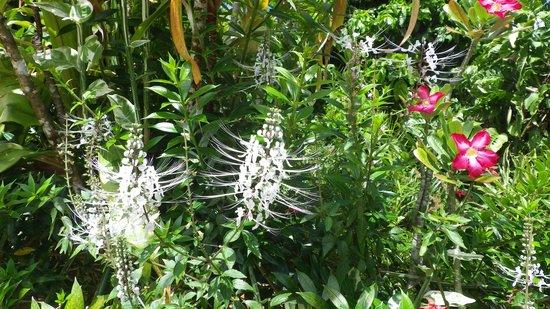 Pension Tupuna: fleurs du jardin