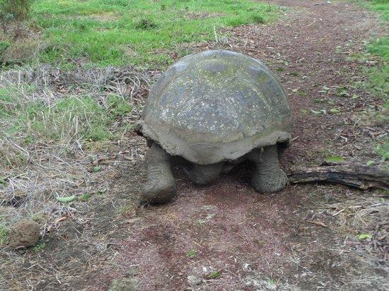 Reserva El Chato: tartaruga