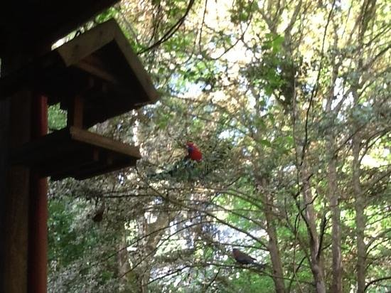 Arnica Views: Feed the Rosellas on your own porch
