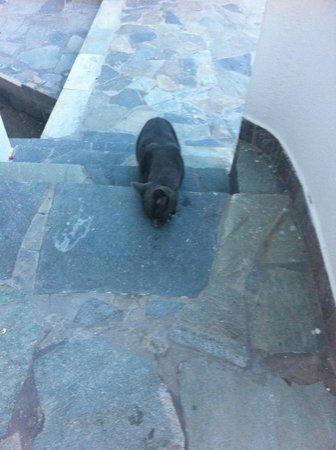 Villas Joanna: Cool cat!