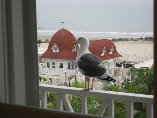 Hotel del Coronado: Morning Visitor