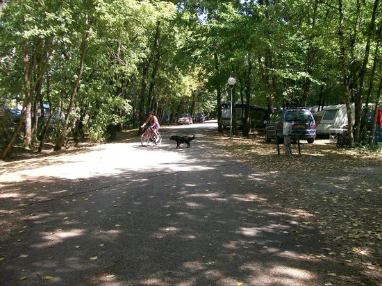Camping La Vallée Bleue : allée